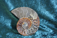 Ammonite/Ammolite Half Large, ammonite, - Goddess Stone