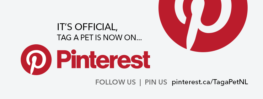 Tag a Pet is Officially on Pinterest!