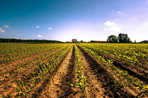 GMOs, Herbicides, and Public Health