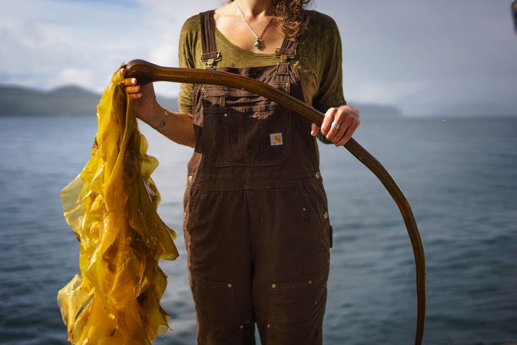 From sea to skin: The story of wild bull kelp in our natural skincare