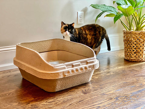 Sifting Boxes for Cats