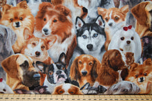 Fabric Shack Elizabeths Studio Dog Breeds Sewing Quilting Sew Fat Quarter Cotton Border Collie King Charles Springer Spaniel French Bull Dog Corgi Weimaraner Chihuahua Maltese Husky Dachsund Sausage Pomeranian