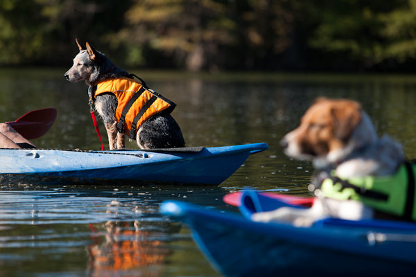 Dogs kayaking on a lake