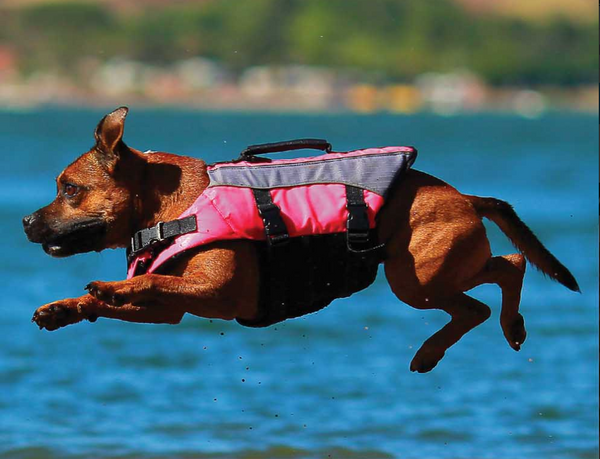 Dog jumping in water with lifejacket on