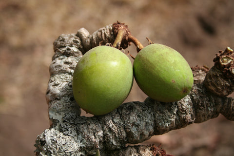 SHEA BUTTER; Butter is a nourishing plant lipid obtained by cold pressing the seeds from the fruit of the Karite tree.