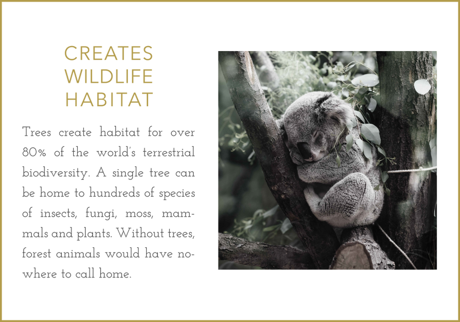 Trees create wildlife habitat.