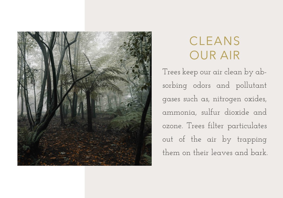Trees clean our air.