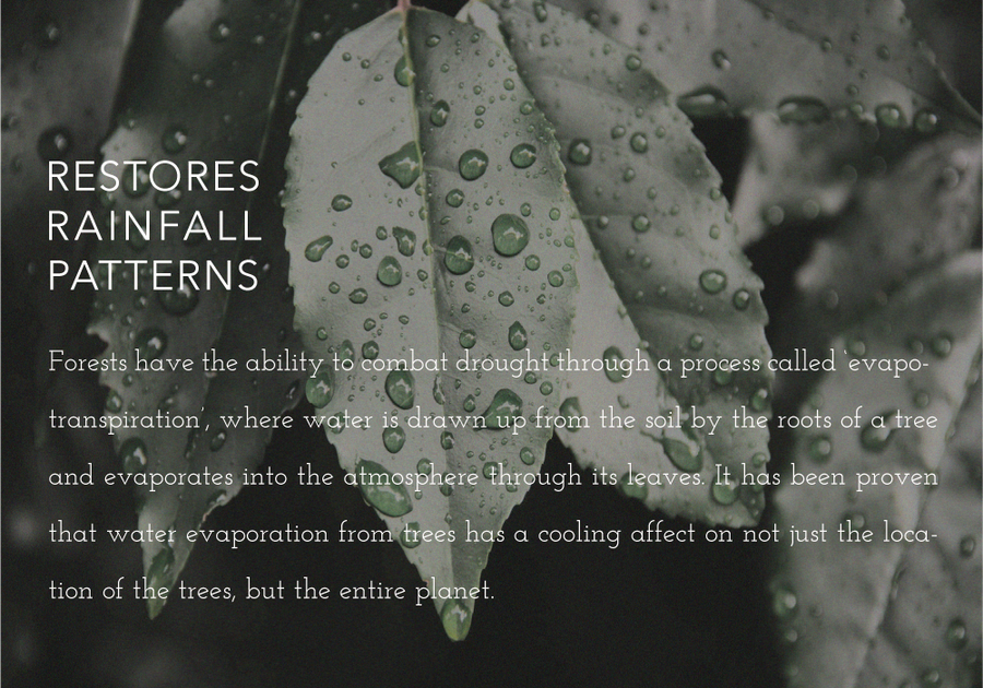 Trees restore rainfall patterns.