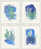 Blue Coral Glicee Prints