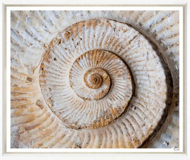 Large Fossil Photograph