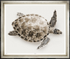 Color Sea Turtle Glicee Print