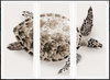 Sea Turtle Fine Art Photo