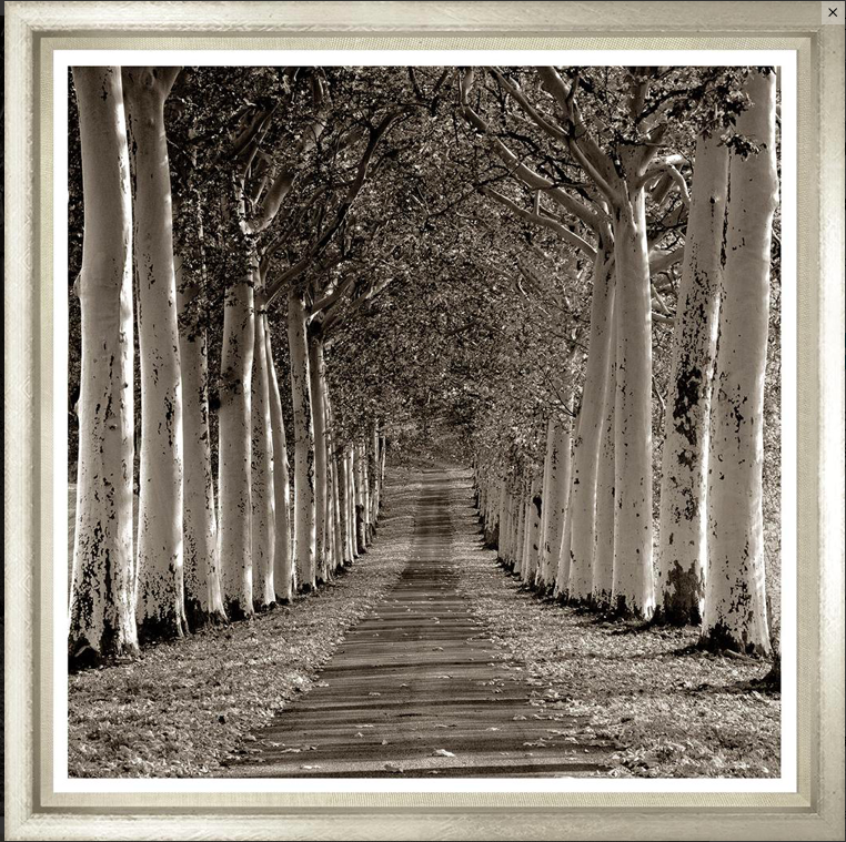 Avenue of Plane trees in France photo