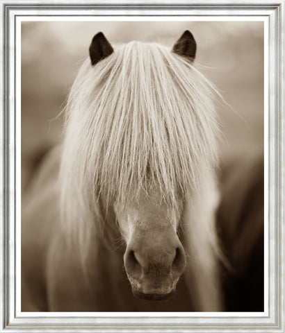 Icelandic Ponies, Large Dramatic Sepia Photographs