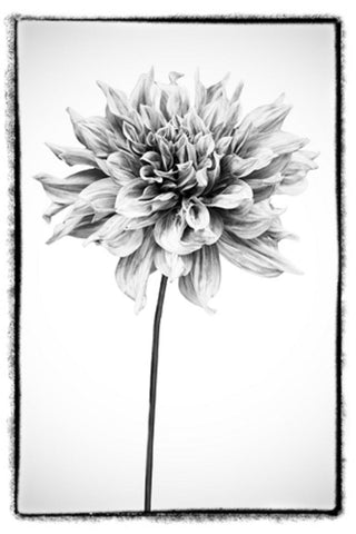 Plexiglass Photographs of Flowers - Hamptons Furniture, Gifts, Modern & Traditional