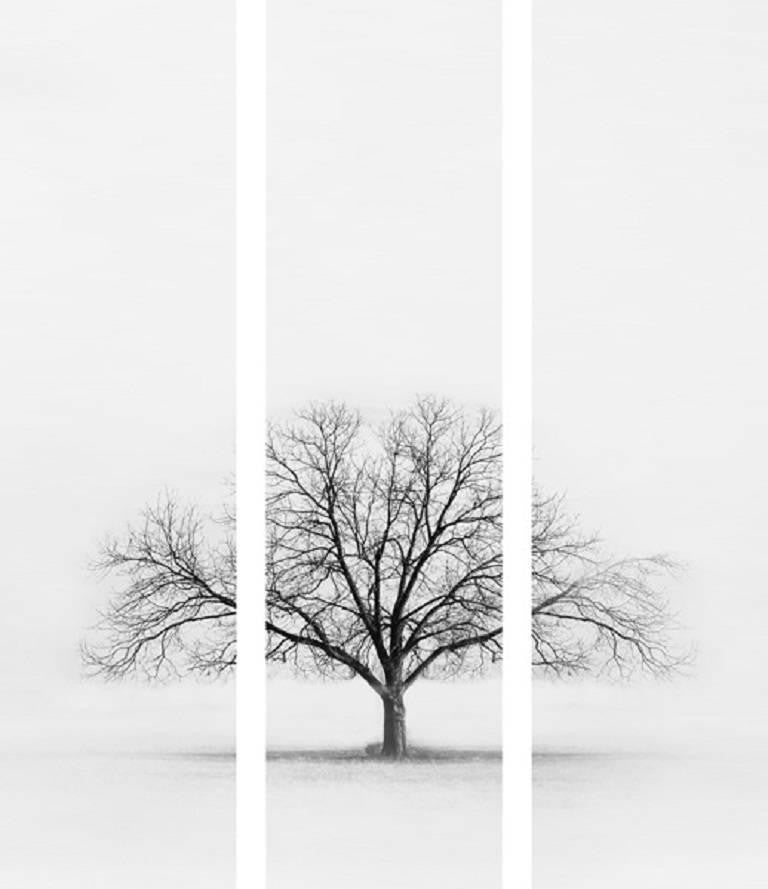 Black and White Tree Triptych
