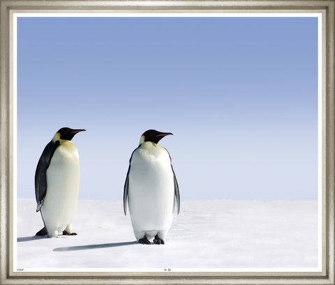Large photograph of two majestic emperor penguins