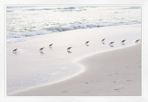 Print of Sanderlings on the Beach