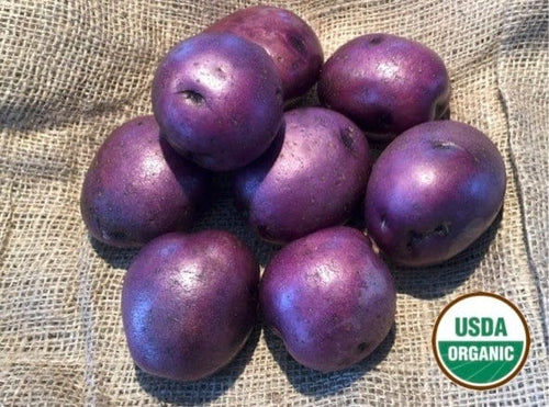 Huckleberry Gold Organic Seed Potatoes