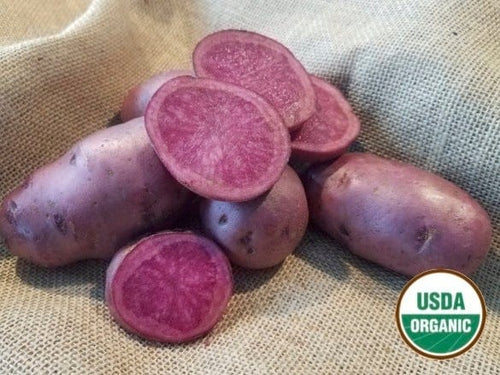 Adirondack Red Organic Seed Potatoes Red flesh