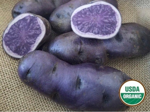 All Blue Organic Seed Potato blue flesh blue skin