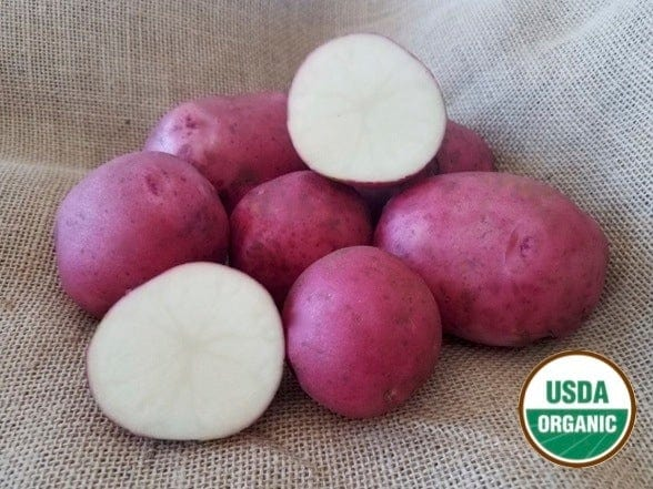 Red Endeavor Organic Seed Potatoes