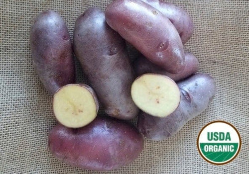 French Fingerling Organic Seed Potatoes