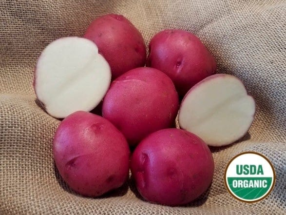 Dakota Rose Organic Seed Potatoes red skin white flesh great flavor
