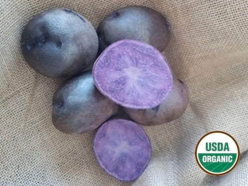 Adirondack Blue Organic Seed Potatoes
