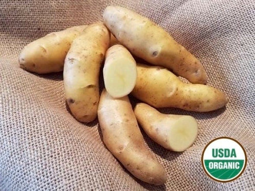 Austrian Crescent Organic Seed Potatoes fingerling