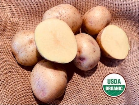 Yukon Gold Organic Seed Potatoes