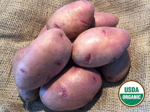 Mondak Gold Organic Seed Potatoes