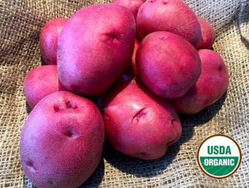 Runestone Gold Organic Seed Potatoes