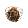 Cocker Spaniel Puppy Paw Print Sublimation Face Mask