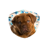 Dogue de Bordeaux Tan Paw print Sublimation Face Mask