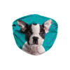 Boston Terrier Puppy Teal Sublimation Face Mask
