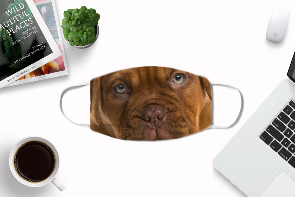 Dogue de Bordeaux Puppy Muzzle