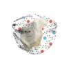 Persian Cat on Yarn Balls Sublimation Face Mask