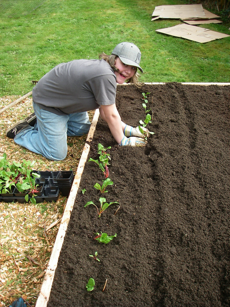 Vegetable Gardens and Raised Beds