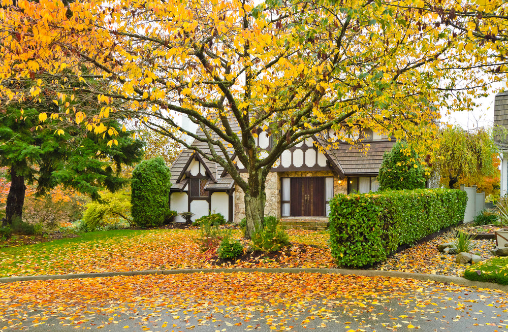 Focusing On Your Fall Landscape
