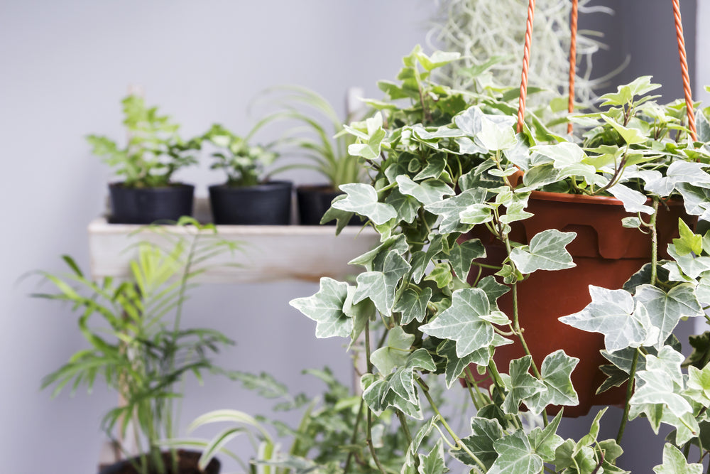 7 Plants That Can Purify Your Air