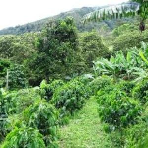 Colombia Tolima La Cumbre, Organic and Fair Trade
