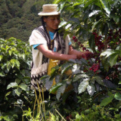 Peru Las Damas de San Ignacio, Organic and Fair Trade