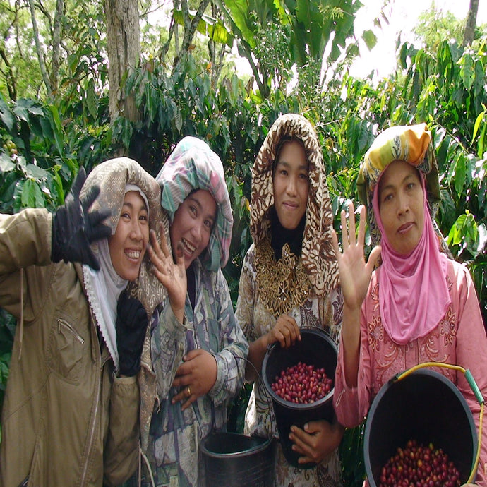 Sumatra Aceh Ketiara, Organic and Fair Trade