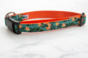 Teal Oranges Canvas Dog Collar