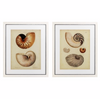 ANTIQUE NAUTILUS SET OF 2 PRINTS