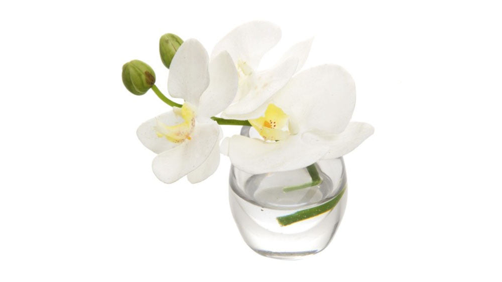 White Phalenopsis Orchids In Glass Vase Set Of 3 Simply