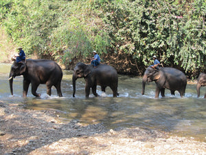 5 Things To Do In Thailand Besides Elephants