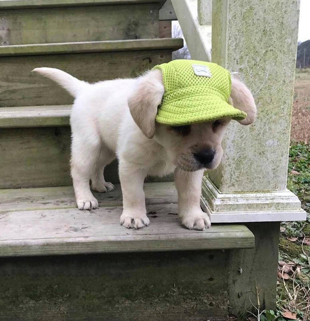 Baseball Cap for Dogs - FREE