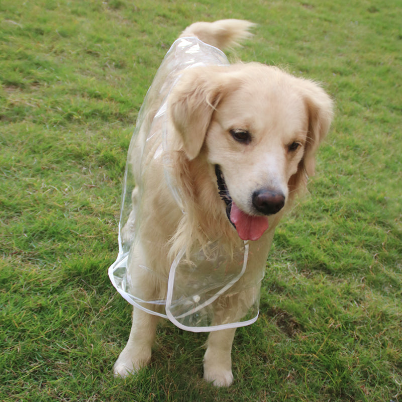 Transparent Raincoat - Large Dog